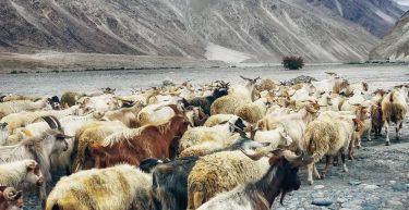 Efeito manada: entenda o que é e como pode ser evitado